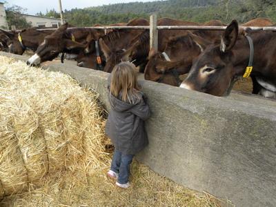 ver animales salvajes con los niños