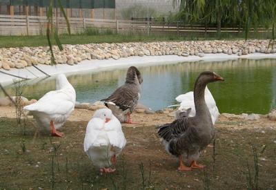 parque de aves