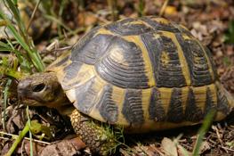 Centro de Reproducción de Tortugas de la Albera