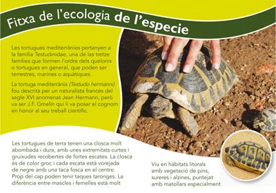 Centre de recuperació de la tortuga mediterrània