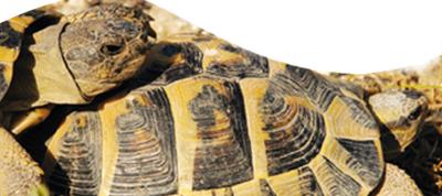 Centro de Interpretación y reproducción de la tortuga mediterránea