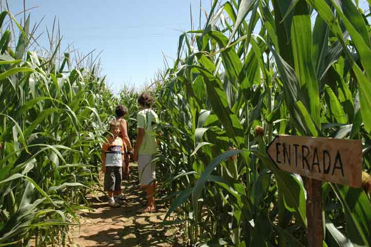 laberint de blat de moro amb nens