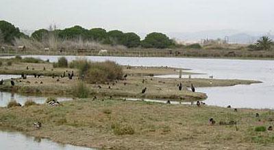 Remolar Filipines - Espais Naturals del Delta del Llobregat
