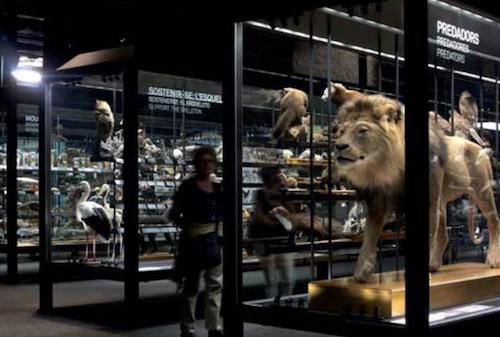 Museo de Ciencias Naturales de Barcelona