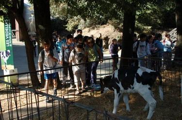 granja de yogures para niños La Fageda