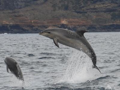 acores-dofins-a-paseo