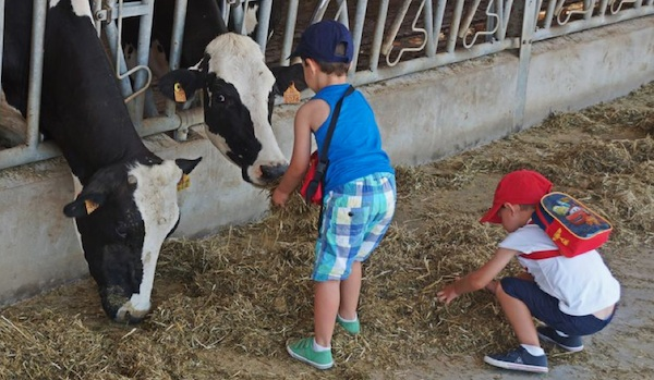 sortir-amb-nens-al-maresme-granja-de-vaques-can-gel
