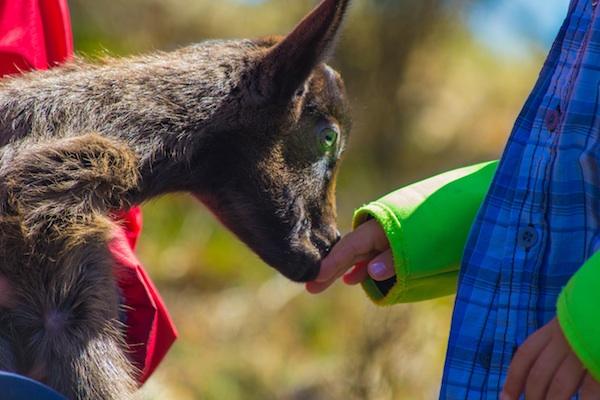 sortir-amb-nens al solsones-zoo-del-pirineu