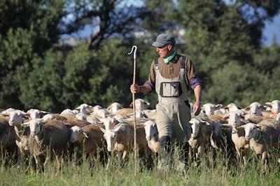 granja de ovejas