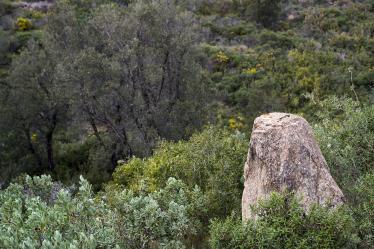 salir con niños en dolmenes y menhires
