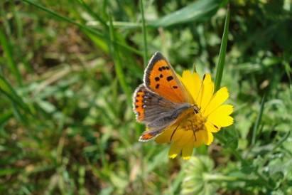 día de las mariposas