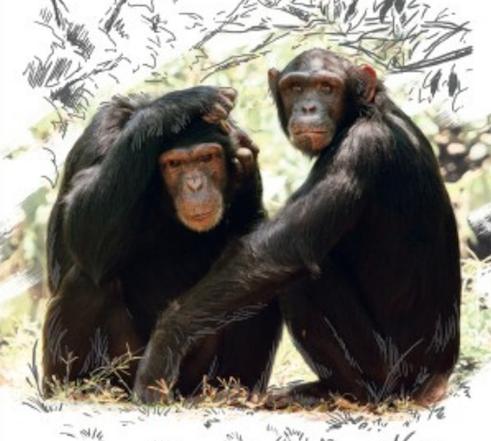 Coneix als primats a Granollers