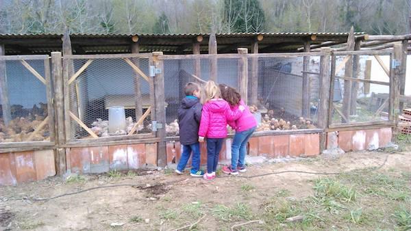 gallines amb nens