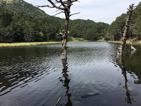 bassa d'oles