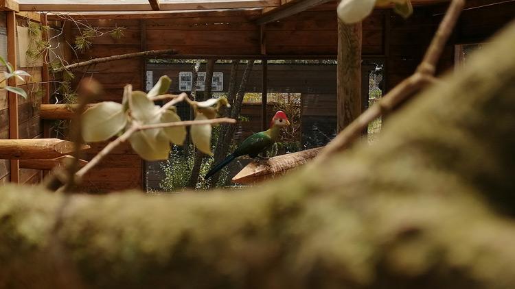jardí dels ocells