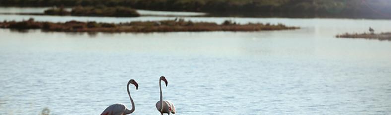 Tallers familiars a Món Natura Delta de l'Ebre