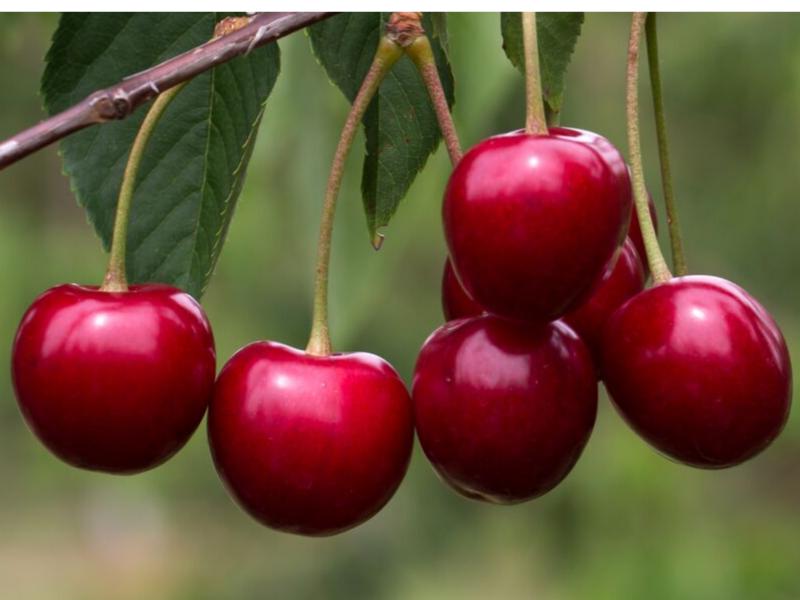postres con cerezas