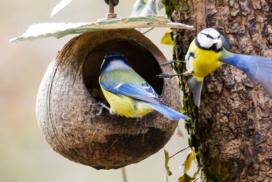 casitas para pájaros