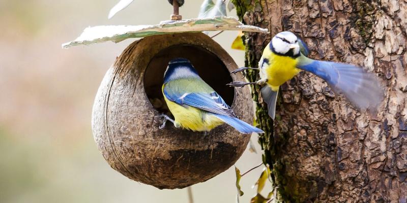 casetes per a ocells